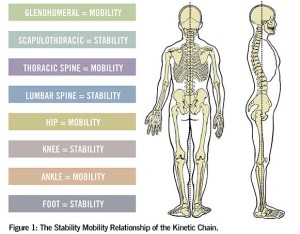 KineticChain-Mobility-Stability
