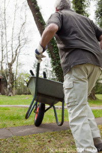 Man pushing wheelbarrow in backyard