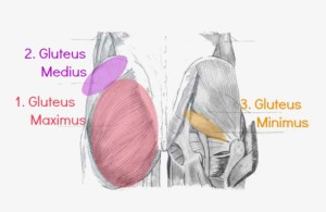 fitwirr.com_glutemuscles
