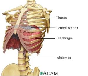 diaphragm-thevoicenotes.com_image