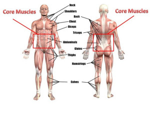 core-muscles_phacctive.files.wordpress_image